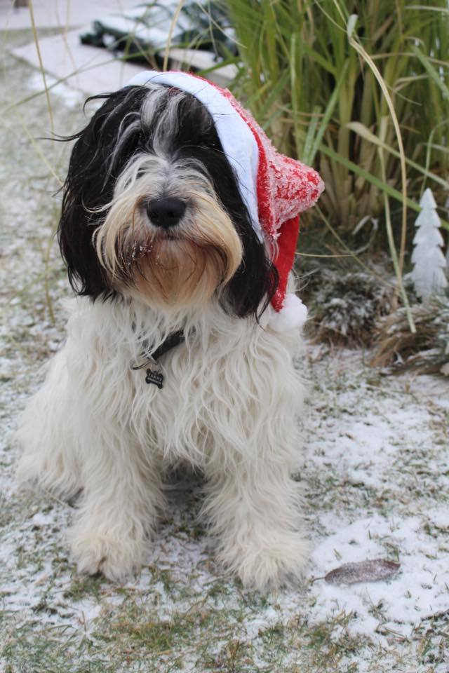 PON_mit_Weihnachtsmützen
