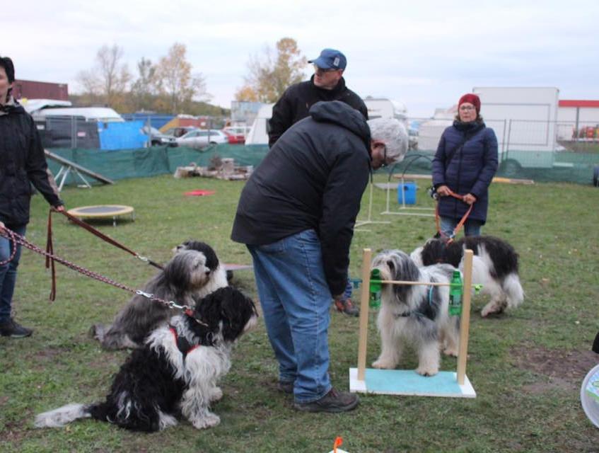 Hundetraining PONn