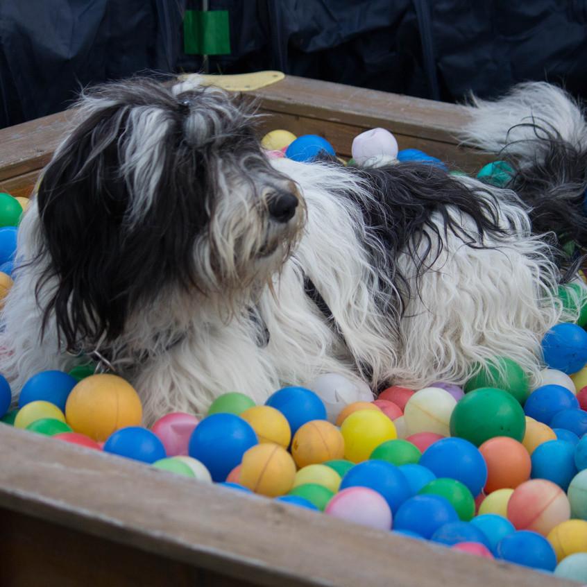 Hundetraining Fanny