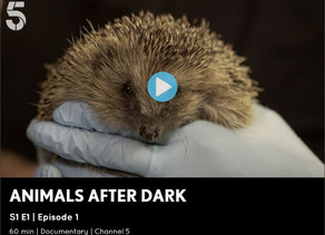 Mr Lumpy & Friends appear on Animals After Dark CH5 Series 1 Episode 1