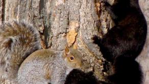 Factual Friday Squirrels