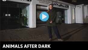 Mr Lumpy & Friends appear on Animals After Dark CH5 Series 1 Episode 3