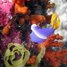 scuba diving marine life Padang Bay