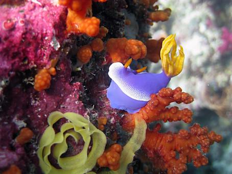 S'adonner à la plongée sous-marine à Bali : 3 spots incontournables