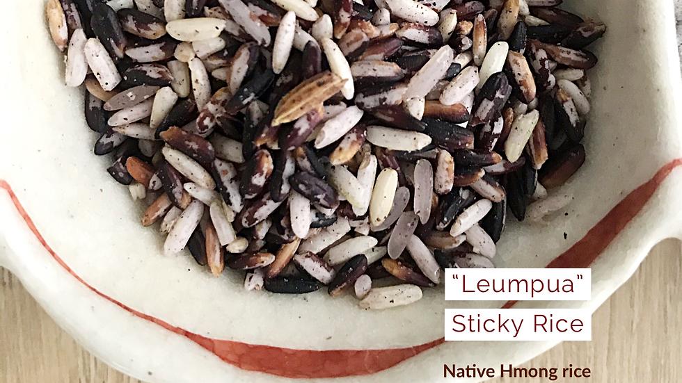 Organic Leumpua sticky rice ~ (500g)