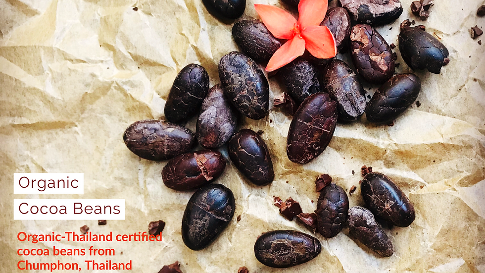 Organic Cocoa Bean (90g)