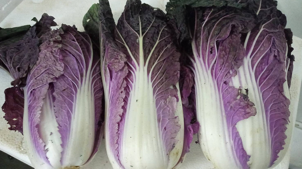 Organic Purple Napa Cabbage ~ (800g-1kg)