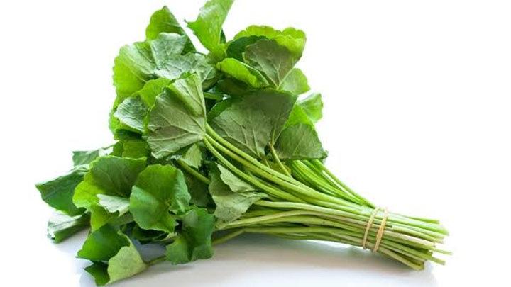Organic Gotu Kola (100g)