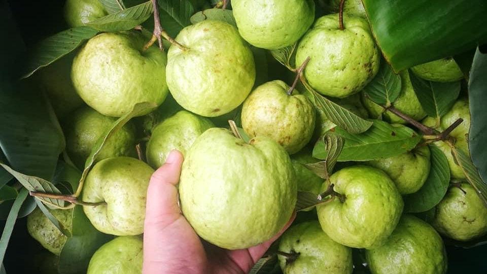 Organic Guava (600-650g)