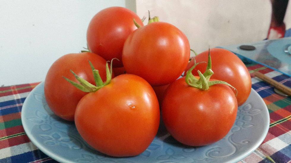 Organic Thomas Tomato (500g)