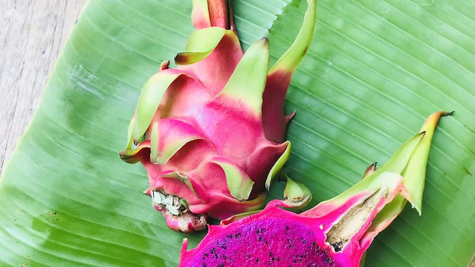 GAP Pink Dragon Fruit