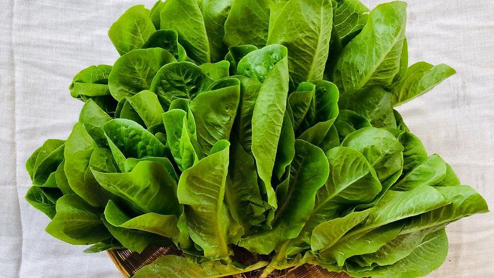 Organic Mixed salad (150g)