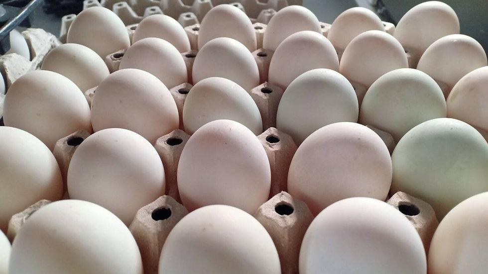 Organic duck eggs (6)