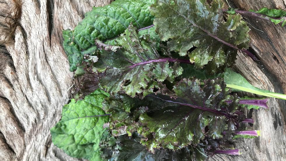 Organic Purple Kale Mix (100g)