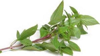 Organic Thai Basil (50g)