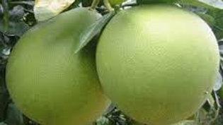 Organic Honey Pomelo ~(1.75kg)