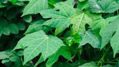 Organic Chaya (100g)