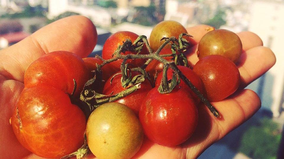 Organic Wild Tomato (200g)