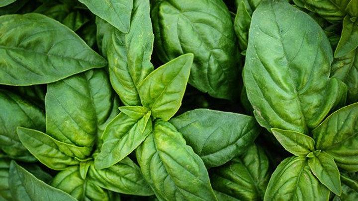Organic Italian basil (50g)