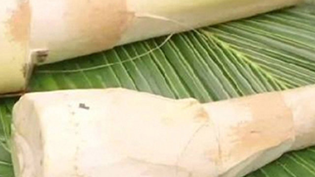 Organic Coconut Shoot (500g)