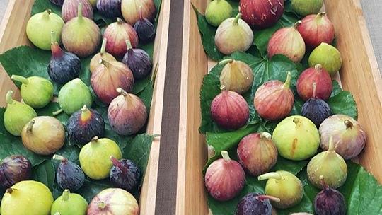 Organic Fig (500g)