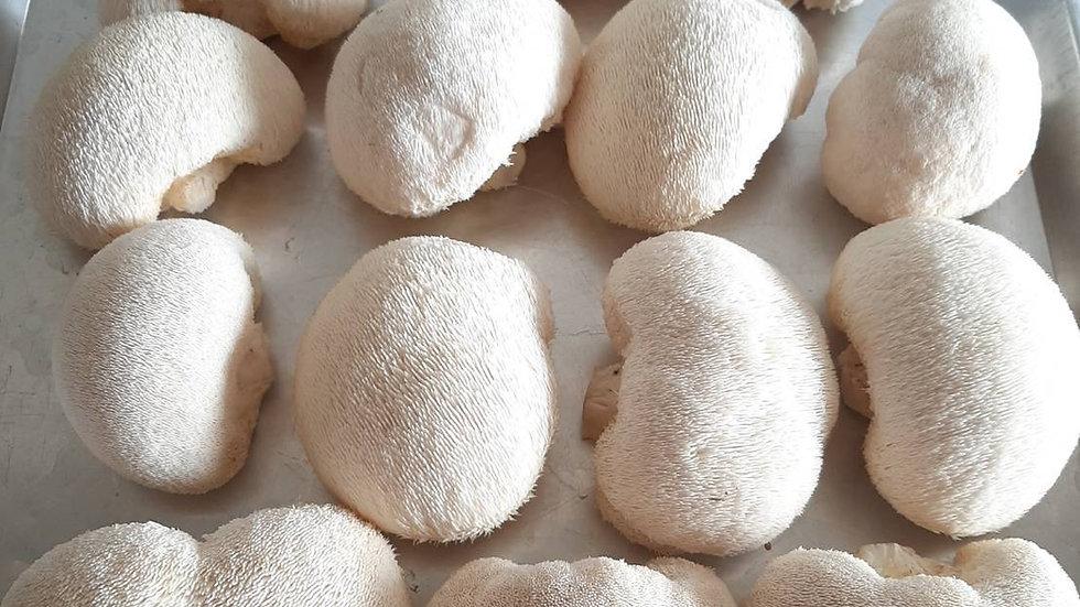 Organic Lion's mane Mushroom (150g)