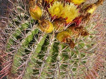 Cabbage Casserole & Arizona Cactus