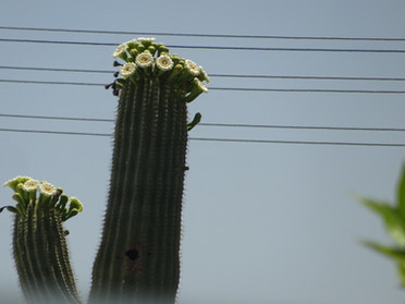 Arizona-Style Flowers for May