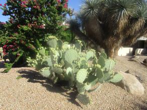 desert flora fauna.JPG