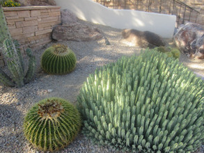 Cactus varieties kathryn bechen.JPG