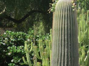 bird cactus kathryn bechen.JPG
