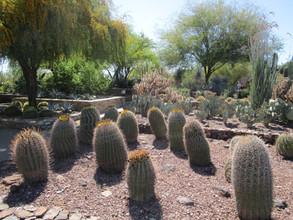 Desert Botanical Garden PHX.JPG