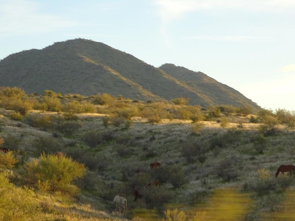 Tonto National Forest, Arizona wild horses taken by Kathryn Bechen
