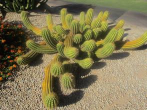 Cactus Camelback Inn Kathryn Bechen.JPG