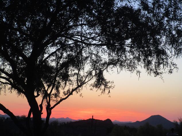 Cactus and Sunset Las Sendas 5-19 Kathry