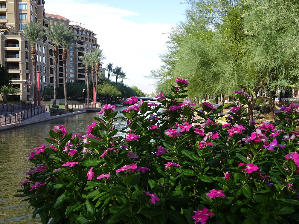 Scottsdale Waterfront AZ Kathryn Bechen