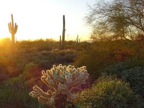 1 Kathryn Bechen Desert Beauty AZ.JPG
