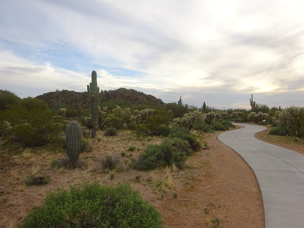 Arizona desert beauty path