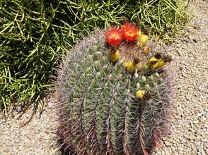 Cactus Fountain Hills AZ Kathryn Bechen.