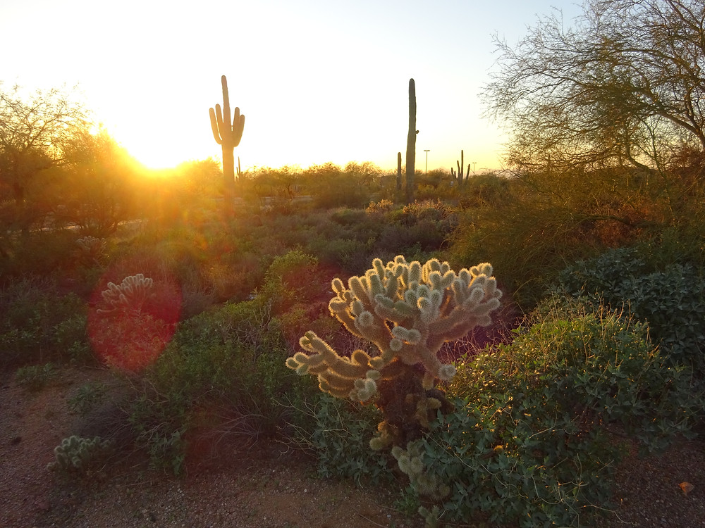 Arizona desert beauty Kathryn Bechen