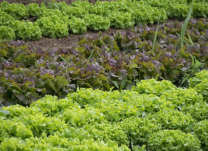 vegetables-861363_1920.jpg