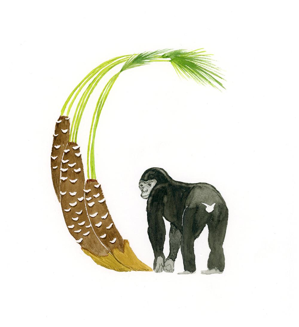 Gorilla.