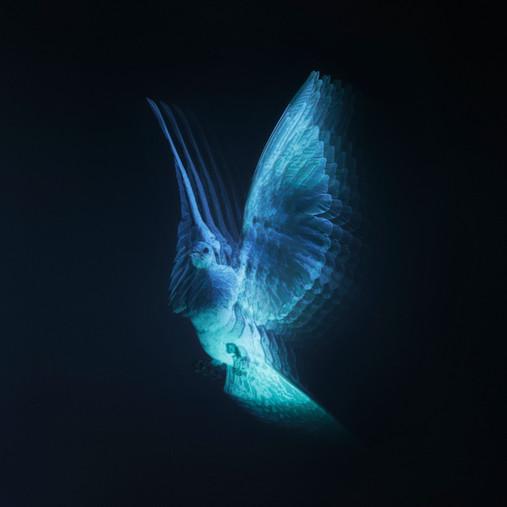 IMAGINATION   HOLOGRAM   TED HUMBLE SMITH