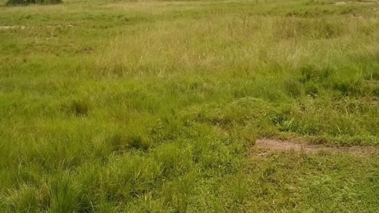 Land at Elerangbe, Lekki Nigeria