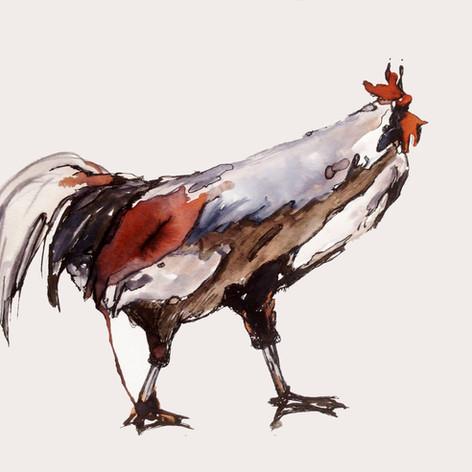 תרנגול.JPG