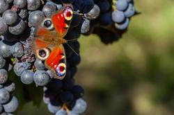 De la vie dans les vignes