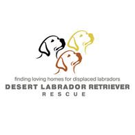 Desert Labrador Retriever Rescue