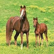 יום הולדת סוסים מושלמת! אצלנו תמצאו צלחות סוסים, כוסות סוסים, מפיות סוסים, מפת שולחן סוסים ועוד המון דברים שווים!