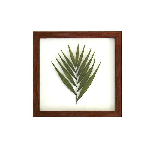 Q U A D R O  palmeira