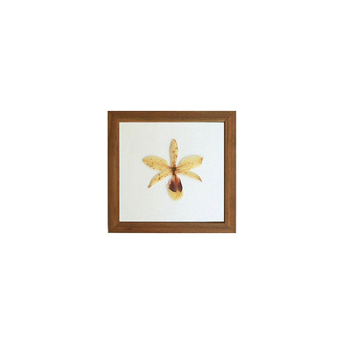 Q U A D R O  orquídea